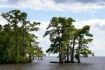Cypress islands are common in the Edenton area.